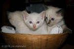 Kittens in Basket 0022 - Arcos, Spain