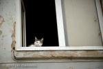 Cat in Window 013 - Estonia