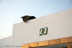 Cat on Roof 046 - Arcos, Spain
