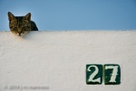 Cat on Roof 047 - Arcos, Spain