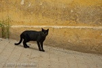 Black Cat in Street 062 - Tangiers, Morocco