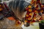 Horses 077 - Feria De Caballos - Jerez, Spain