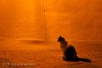 Cat in Street 092 - Arcos, Spain
