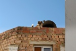 Dog & Cat on Rooftop 147 - Arcos, Spain