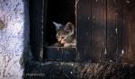 Kitten 21 - Tokaj, Hungary