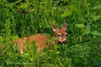 NVPG_Animals-28142