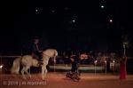 Horse Show 413 - Feria de Arcos - Spain
