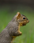 Squirrel 5381 - Oregon