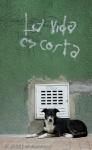La Vida Es Corta 5751 - Bogotá
