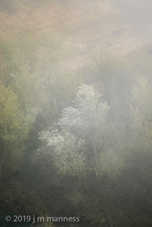 Tree in Fog 0155b -Arcos, Spain